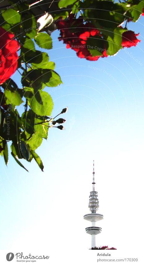 Sky Blue Plant Sun Summer Leaf Far-off places Garden Park Technology Rose TV set Television Blossoming Landmark Fragrance