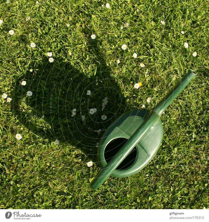 Water Flower Green Summer Meadow Grass Garden Park Rain Growth Plastic Dry Daisy Door handle Cast Gardening