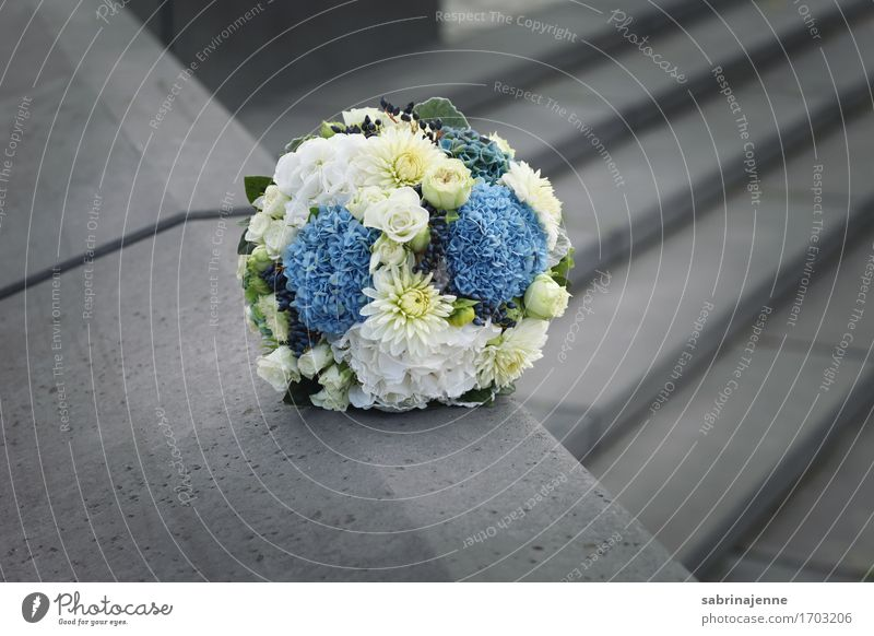 bridal bouquet Bouquet Happy Matrimony Wedding Flower Blue White Gray Isolated Image Love Bundle Wedding anniversary Colour photo Exterior shot Copy Space right