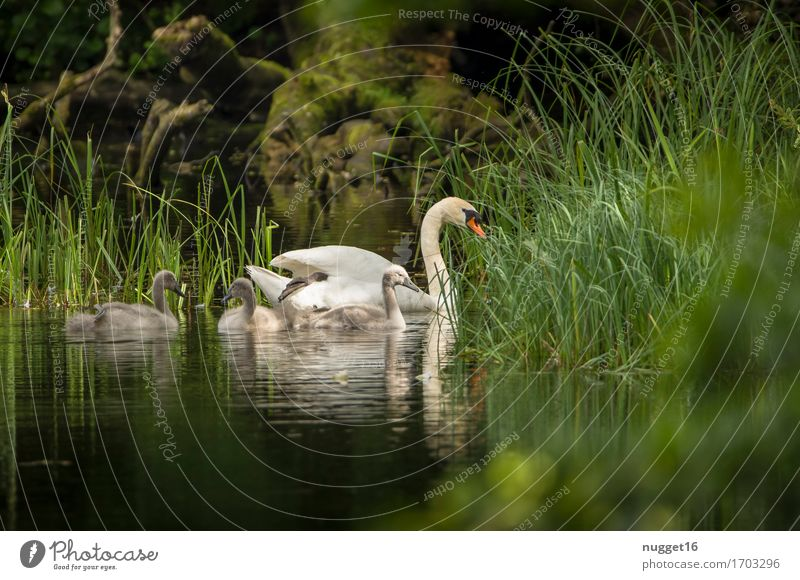 Nature Plant Summer Green Water White Landscape Animal Forest Baby animal Grass Gray Swimming & Bathing Lake Brown Bird