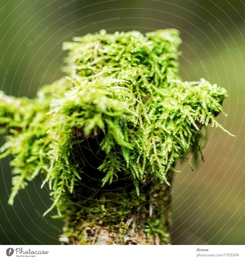 mummery Head Hair and hairstyles Plant Moss Forest Virgin forest Hat Pole Wood Growth Fresh Funny Natural Soft Green Nature Joy Wrap up warm Damp Wig