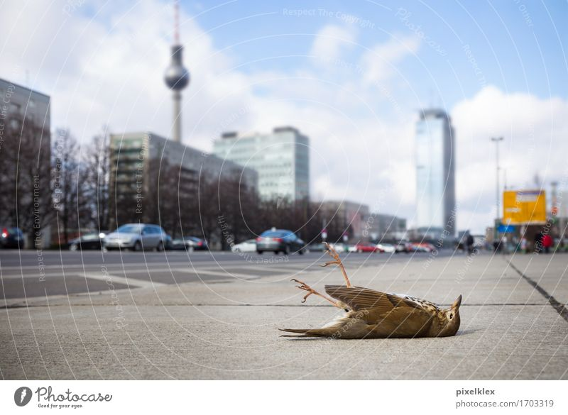 City Animal Environment Street Architecture Sadness Berlin Building Death Germany Bird Lie Wild animal High-rise Grief Illness