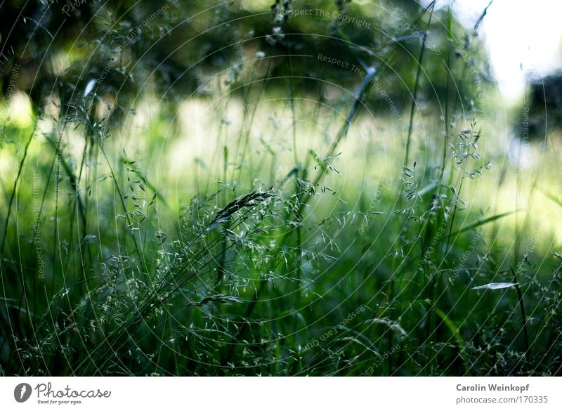 Nature Plant Sun Summer Environment Landscape Meadow Emotions Grass Spring Park Moody Wind Field Bushes Beautiful weather