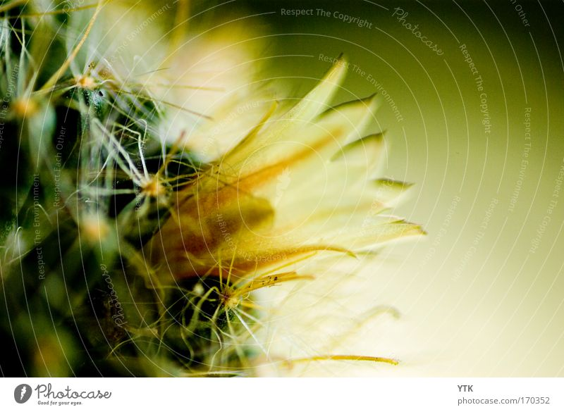 Nature Beautiful Plant Summer Yellow Colour Blossom Moody Esthetic Growth Threat Change Desert Protection Transience Point