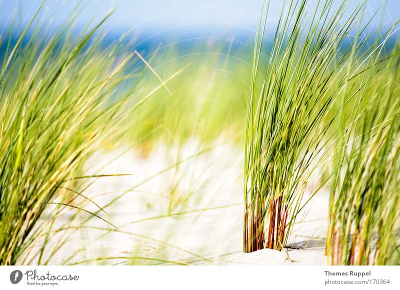 Green by the sea II Vacation & Travel Summer Summer vacation Beach Ocean Environment Nature Landscape Sand Water Sky Spring Beautiful weather Wind Warmth