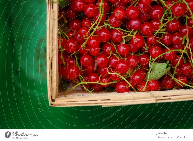 Träuble Food Fruit Organic produce Beautiful Sweet Green Red Bird's-eye view Section of image Partially visible Fruit basket Redcurrant Stalk Colour photo