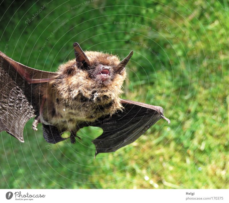 bat Colour photo Subdued colour Exterior shot Close-up Deserted Copy Space right Copy Space top Copy Space bottom Day Sunlight Central perspective