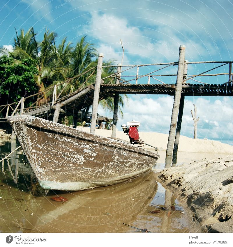longtail Colour photo Subdued colour Exterior shot Day Central perspective Vacation & Travel Trip Adventure Beach Sand Water Palm tree Coast River bank Bay