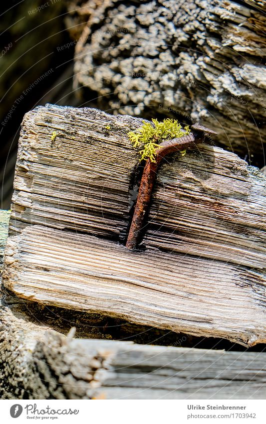 600 | Firmly anchored Wood Metal Old Natural Power Transience Attachment log Chopping board Texture of wood Nail Iron Rust To plunge stop smashed Moss