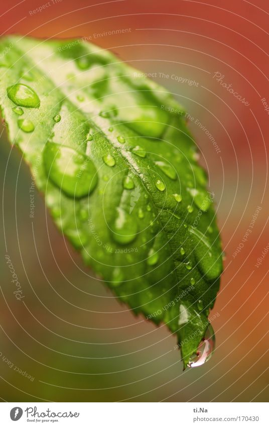 Nature Water Green Red Plant Leaf Animal Environment Sadness Moody Park Wet Natural Climate Drops of water Growth
