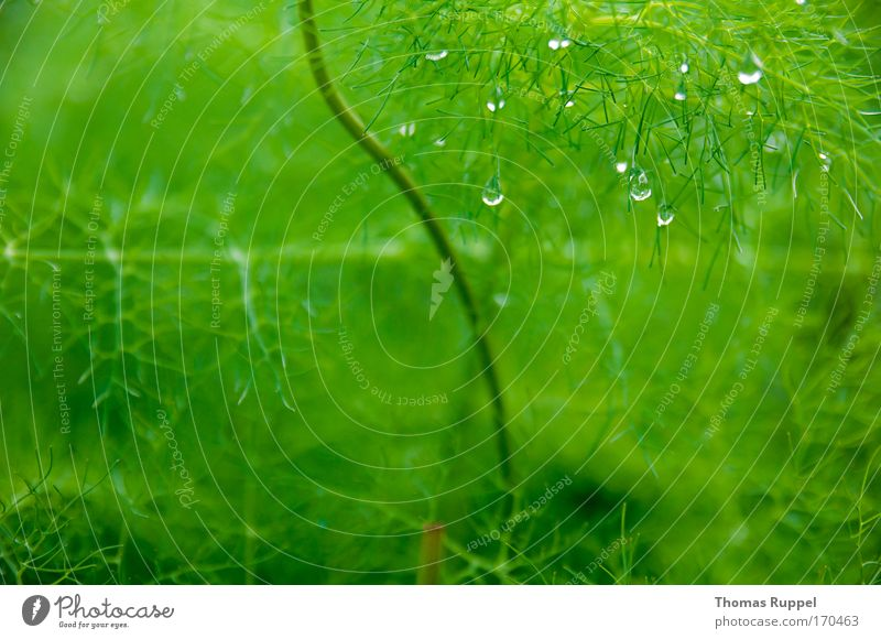 Nature Water Green Plant Rain Fog Environment Drops of water Wet Damp Foliage plant