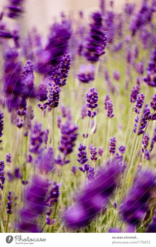 dancing violet. Colour photo Exterior shot Close-up Deserted Blur Motion blur Shallow depth of field Central perspective Happy Healthy Harmonious Senses