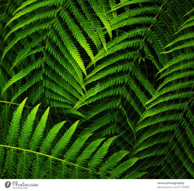 jungle leaves Colour photo Exterior shot Close-up Detail Macro (Extreme close-up) Structures and shapes Copy Space left Copy Space right Copy Space top