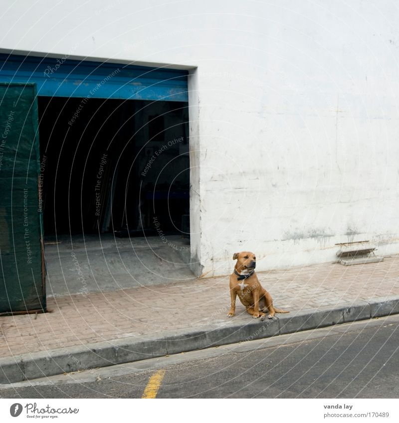 House (Residential Structure) Loneliness Animal Wall (building) Dog Wall (barrier) Building Wait Sit Safety Factory Threat Serene Gate Manmade structures