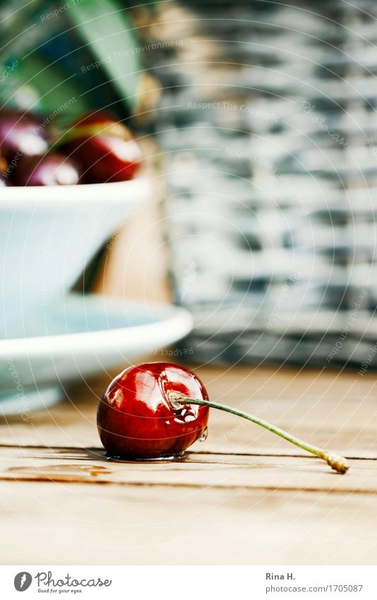 CherryStill Fruit Delicious Wet Sweet Still Life Food photograph Colour photo Exterior shot Deserted Copy Space bottom Shallow depth of field