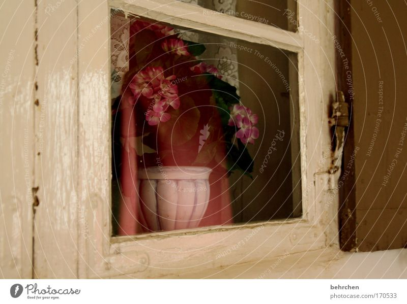 the secret window Colour photo Interior shot Malchow Mecklenburg-Western Pomerania Small Town Old town Manmade structures Monastery Arcade Window