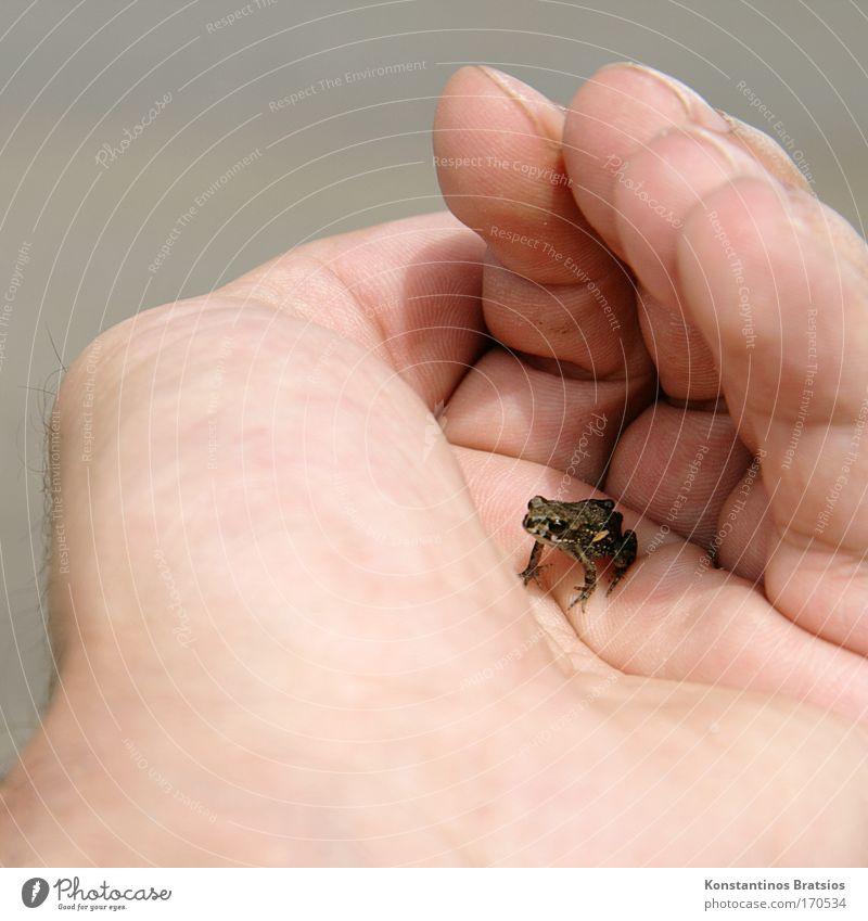 Human being Nature Hand Animal Freedom Gray Jump Small Bright Lake Baby animal Wait Beginning Fingers Cute