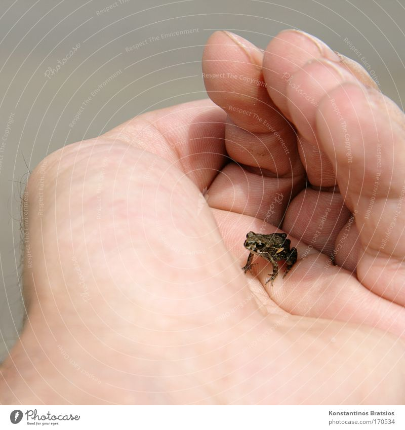 Human being Nature Hand Animal Freedom Gray Jump Small Bright Lake Baby animal Wait Beginning Fingers Free Cute