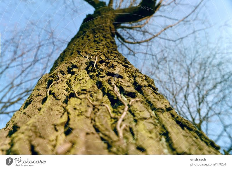 Nature Sky Tree Sun Plant Leaf Forest Tall Branch Radiation Tree trunk Tree bark Natural growth