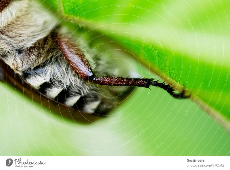 Nature White Green Plant Summer Leaf Black Animal Meadow Spring Legs Brown Environment Insect Stripe Pelt