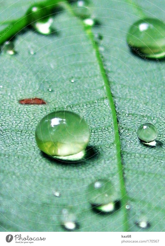 Pearls in the morning Structures and shapes Morning Day Shadow Nature Plant Drops of water Spring Summer Storm Rain Thunder and lightning Grass Leaf Park Meadow
