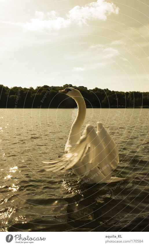 Water Beautiful Sun Calm Animal Lake Moody Together Bird Romance Authentic Feather Wing Warm-heartedness Wild animal Infatuation