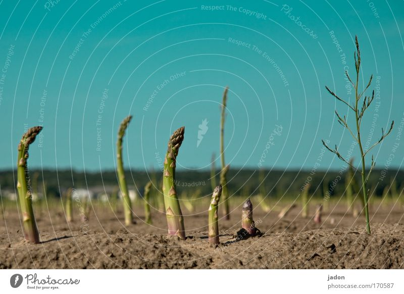 strong affection Exterior shot Copy Space top Worm's-eye view Nutrition Organic produce Landscape Earth Sand Cloudless sky Field Dance Passion Sympathy