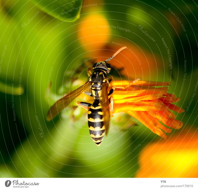 Nature Green Plant Summer Flower Animal Relaxation Warmth Blossom Orange Flying Esthetic Break Wing Soft Touch