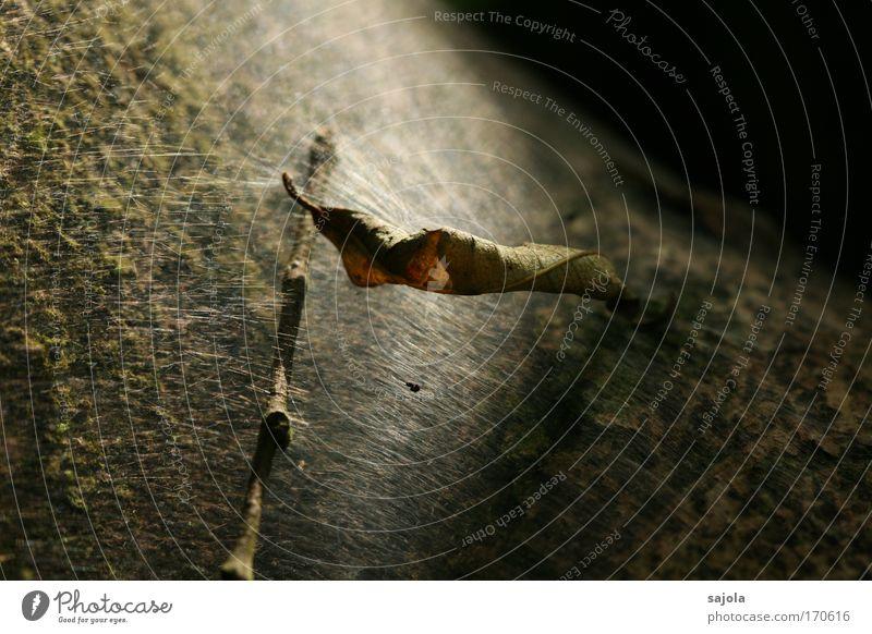 Nature Old Tree Plant Leaf Black Dark Brown Environment Esthetic Gloomy Change Lie Branch Transience Natural