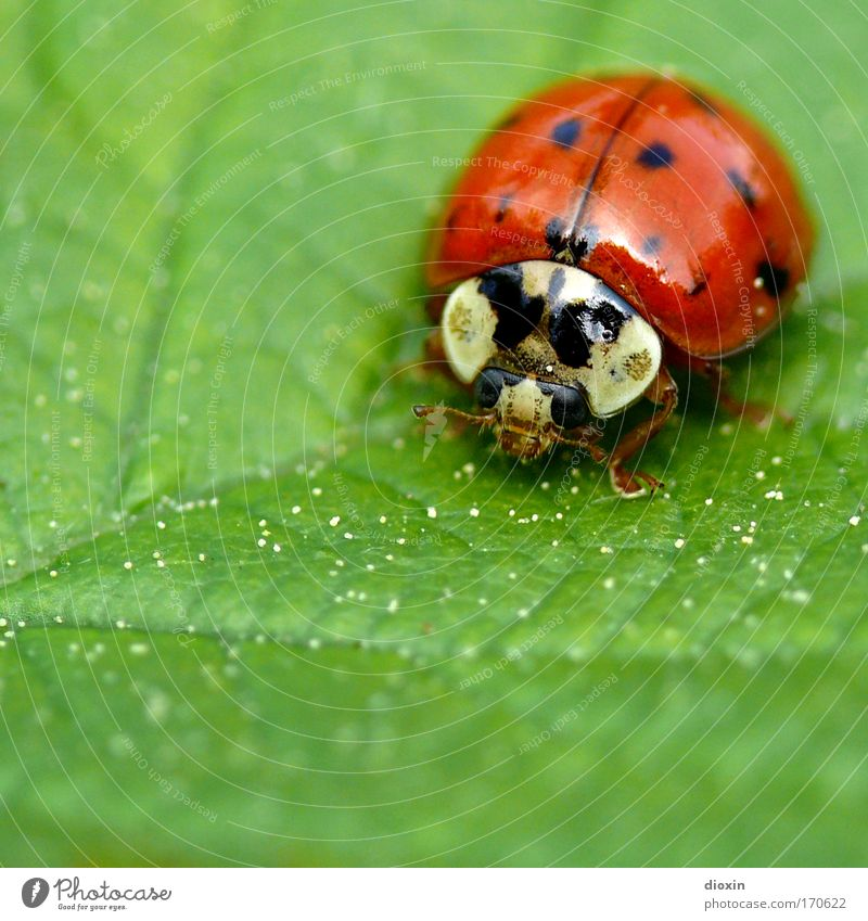 Nature Green Red Plant Animal Black Environment Meadow Small Park Insect Beetle Crouch