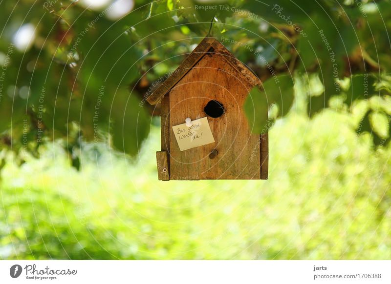 until Beautiful weather Tree Leaf Park Forest House (Residential Structure) Exceptional Natural Living or residing Piece of paper Information Birdhouse