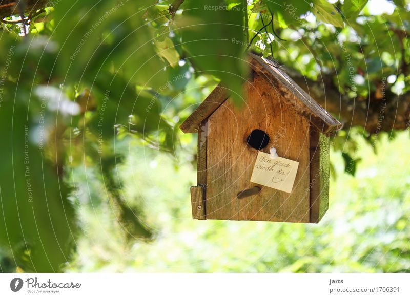 ...immediately... Beautiful weather Tree Leaf Garden House (Residential Structure) Hut Living or residing Piece of paper Information Birdhouse Going
