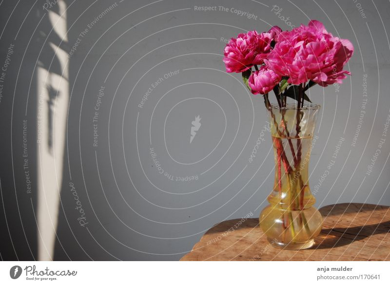 Roses Colour photo Interior shot Deserted Day Decoration Flower Blossom Wood Glass Pink Calm