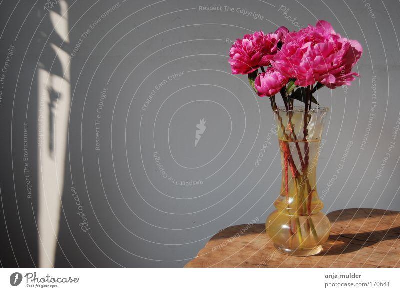 Roses Flower Calm Blossom Wood Pink Glass Rose Decoration