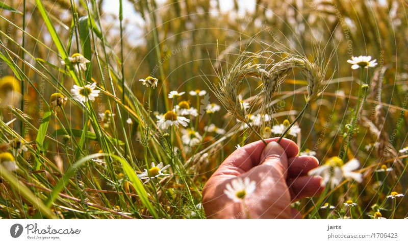 nature lovers Food Grain Hand 1 Human being Environment Nature Plant Summer Beautiful weather Agricultural crop Field Fresh Healthy Natural Positive Contentment