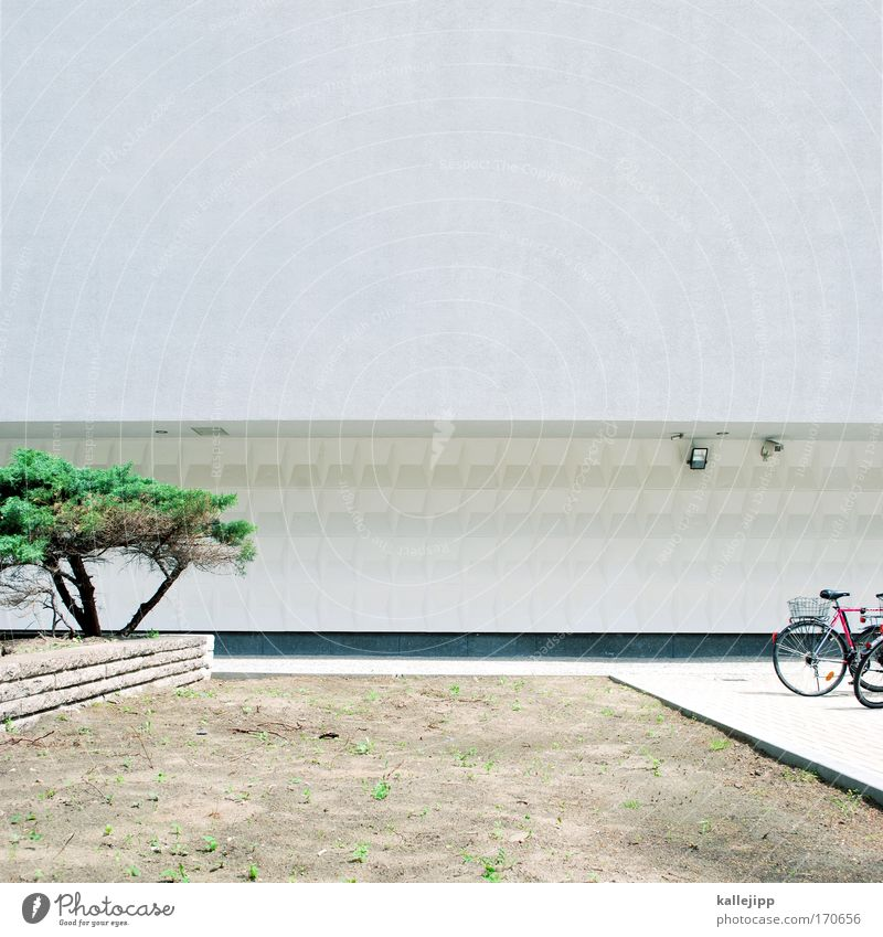 tree, bike, concrete Colour photo Subdued colour Exterior shot Copy Space top Day Central perspective Leisure and hobbies Living or residing