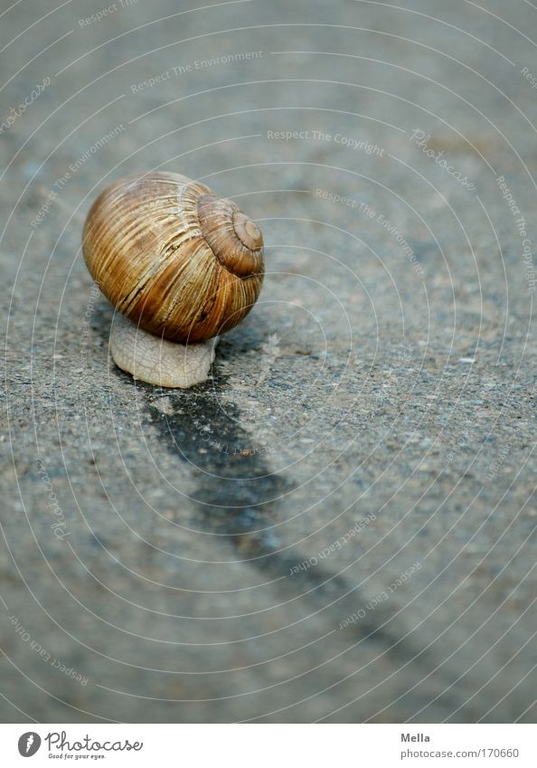 Nature Animal Street Lanes & trails Speed Asphalt Tracks Escape Snail Crawl Slowly Slimy Snail shell Flee Mucus Suck-up