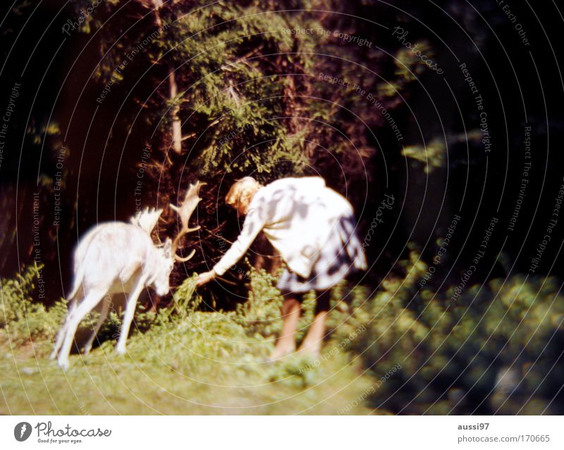 Human being Animal Feminine Zoo Forest Surrealism Fairy tale Feeding Elk Food Enchanted forest Salami Petting zoo