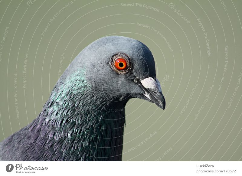 Green Red Animal Eyes Gray Air Bird Flying Aviation Wild animal Wing Feather Observe Animal face Near Disgust
