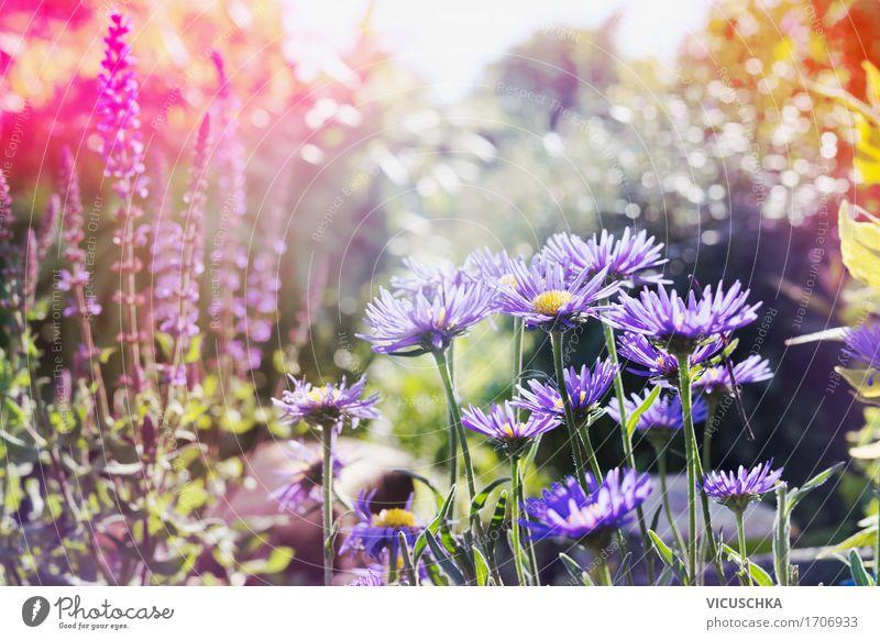 Summer, garden with pink and purple flowers Lifestyle Design Garden Nature Landscape Plant Sunlight Autumn Beautiful weather Flower Grass Leaf Blossom Park