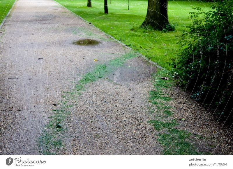 Tree Meadow Grass Garden Lanes & trails Park Logistics Lawn Grass surface Tracks Trash Footpath Tree trunk Avenue Gardener Green space