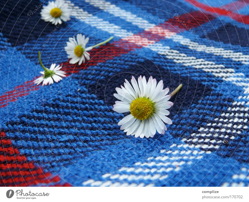Daisy on plaids Colour photo Exterior shot Copy Space right Copy Space bottom Day Sunlight Style Joy Wellness Harmonious Well-being Senses Relaxation Calm
