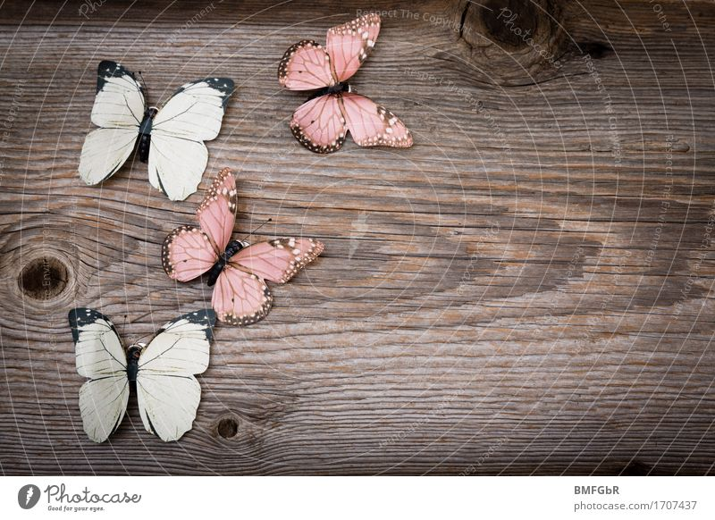 Beautiful Joy Wood Happy Flying Brown Design Contentment Free Decoration Idyll Signs and labeling Happiness Idea Joie de vivre (Vitality) Simple