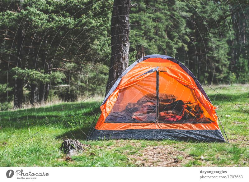 Orange tent in a pine forest Relaxation Leisure and hobbies Vacation & Travel Tourism Adventure Camping Summer Mountain Hiking Nature Landscape Tree Grass Park