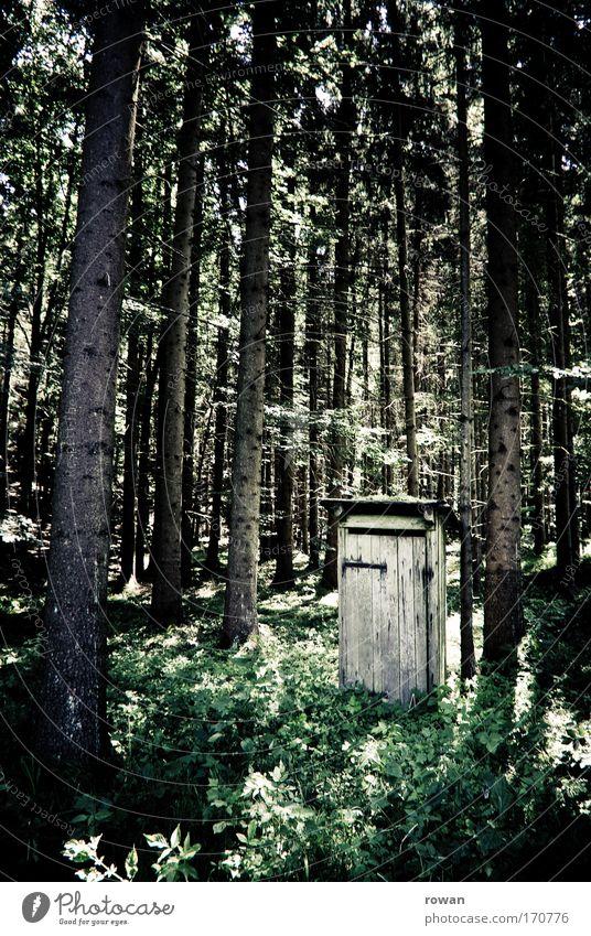 Tree Calm Forest Sit Toilet Hut Tree trunk Clearing Utilize Defecate Bowel movement Latrine