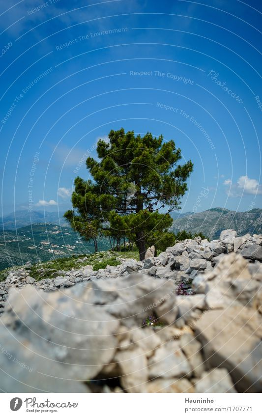 Sky Nature Vacation & Travel Plant Blue Summer Green Tree Landscape Mountain Environment Meadow Grass Freedom Gray Stone