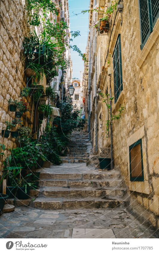 Dubrovnik lX Vacation & Travel Sightseeing City trip Summer Living or residing Flat (apartment) House (Residential Structure) Beautiful weather Plant Flower