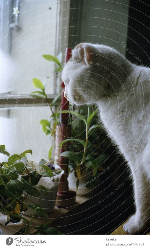 Old White Plant Winter Calm Animal Window Cat Contentment Moody Wait Flat (apartment) Living or residing Warm-heartedness Curiosity Safety (feeling of)
