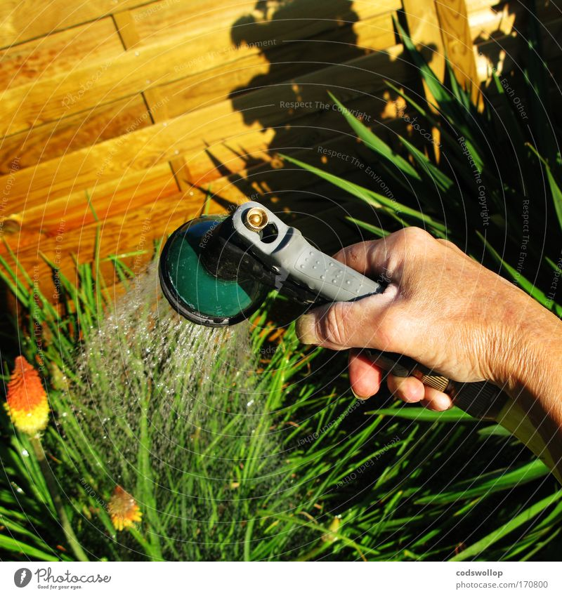 Nature Hand Plant Garden Cast Hose Horticulture Gardening Work and employment Irrigation