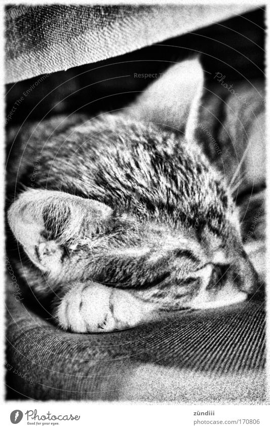 Animal Cat Sleep Animal face Lie To enjoy Pet